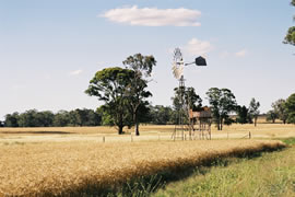 Windmill_wheat